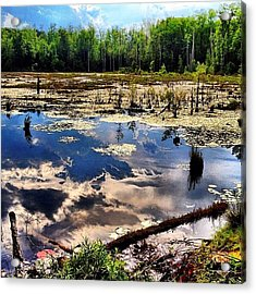 Where The Swamp Things Are Acrylic Print