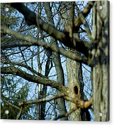 Where The Watch Squirrel Lives Acrylic Print