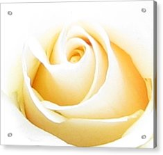 Whipped Butter Cream Rose Micros Acrylic Print by Judyann Matthews