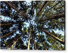 Acrylic Print featuring the photograph Whispering Pines by Rachel Cohen