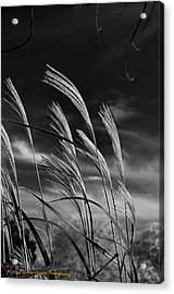 Whispering Wind Acrylic Print by Dan Crosby