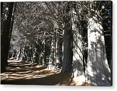 White Alley Acrylic Print by Andrei Fried