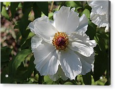 Acrylic Print featuring the photograph White Alluring by Bob Whitt