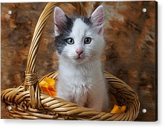 White And Gray Kitty Acrylic Print by Garry Gay
