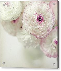 White And Pink Ruffled Ranunculus Flowers Acrylic Print by Cindy Prins