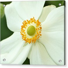 White And Yellow Acrylic Print by Cathie Tyler