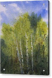 White Birch Trees Acrylic Print by Debbie Homewood