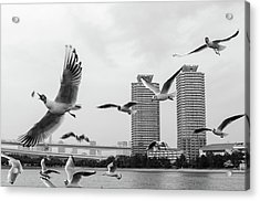 White Birds In Flight Acrylic Print by BZause a picture is worth a thousand words.