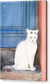 White Cat Acrylic Print by Tom Gowanlock