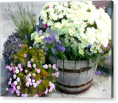 White Chrysanthemums In A Barrel Acrylic Print by Elaine Plesser