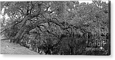 Acrylic Print featuring the photograph White City Oak Pano by Larry Nieland