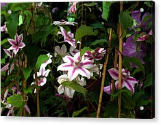 Acrylic Print featuring the digital art White Clematis by Brian Davis