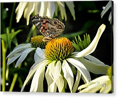Acrylic Print featuring the photograph White Cone Flower With Angel by Nava Thompson