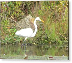White Crane - Wildlife Acrylic Print by Susan Carella