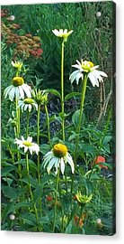 White Daisies And Garden Flowers Acrylic Print by Thelma Harcum