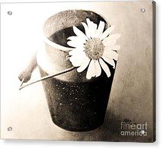 White Daisy Acrylic Print by Muna Abdurrahman