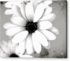 Acrylic Print featuring the photograph White Daisy by Tammy Espino