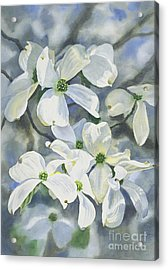 White Dogwood Acrylic Print by Sharon Freeman