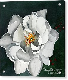 White Double Tulip Acrylic Print