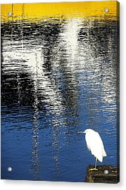 White Egret On Dock With Colorful Reflections Acrylic Print by Anne Mott