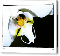 Acrylic Print featuring the photograph White Elegance by Judi Bagwell