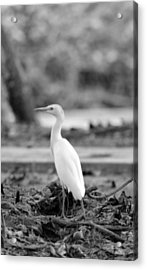 Acrylic Print featuring the photograph White  by Elizabeth  Doran
