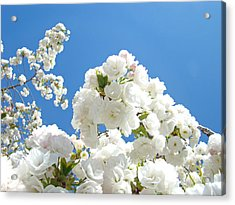 White Floral Blossoms Art Prints Spring Tree Blue Sky Acrylic Print by Baslee Troutman