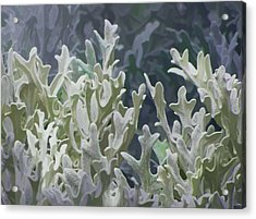 White Forest 7 Acrylic Print by Michael Taggart II