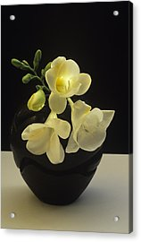 White Freesias In Black Vase Acrylic Print
