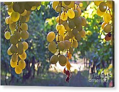 White Grapes Acrylic Print by Barbara McMahon