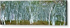 White Gum Forest Acrylic Print