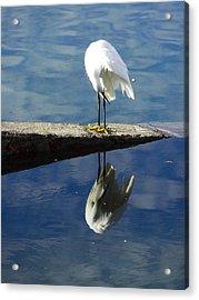 White Heron Acrylic Print by Anne Mott