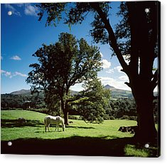 White Horse At Powerscourt, Co Wicklow Acrylic Print by The Irish Image Collection