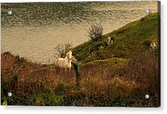 Acrylic Print featuring the photograph White Horse by Barbara Walsh