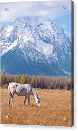 White Horse In Teton National Park Wy Usa Acrylic Print by Chasing Light Photography Thomas Vela
