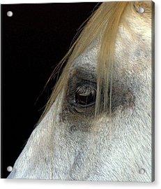 White Horse Acrylic Print by Marmimuralla