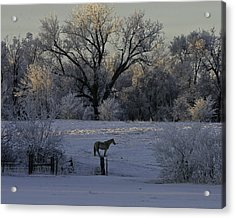 White Horse Winter Acrylic Print by Kenneth McElroy