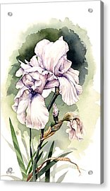 Acrylic Print featuring the painting White Iris by Bob  George