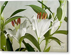 White Lilies Acrylic Print by Nailia Schwarz