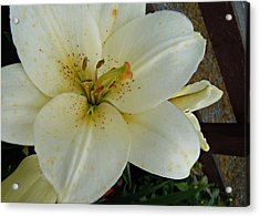 White Lily Acrylic Print by Julie Williams
