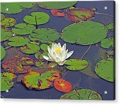 White Lilypad Flower Acrylic Print