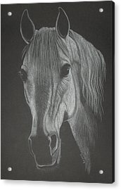 White Mare Acrylic Print by Stephanie L Carr