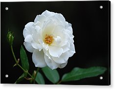 Acrylic Print featuring the photograph White On Black by Kathy Gibbons