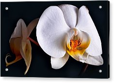 White Orchid Acrylic Print by Dorothy Walker