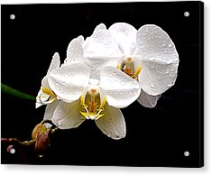 Acrylic Print featuring the photograph White Orchids by Brian Hughes