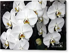 Acrylic Print featuring the photograph White Orchids by Debbie Hart