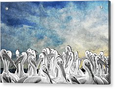 Acrylic Print featuring the photograph White Pelicans In Group by Dan Friend