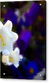 White Purple Acrylic Print by Terence Morrissey