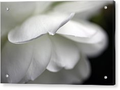 White Rose Flower Petals Acrylic Print by Jennie Marie Schell