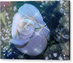 Acrylic Print featuring the photograph White Rose by Michelle Frizzell-Thompson